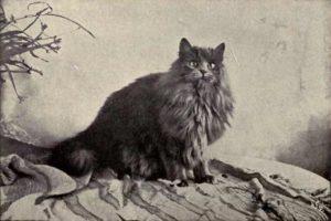 History of Persian Cats